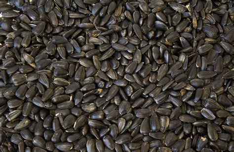 black sunflower 60 thru 10 lb seeds bulk bird birds