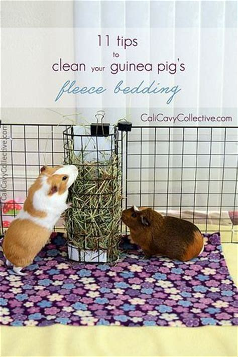 best bedding for guinea pigs 17 best ideas about guinea pig bedding on pinterest