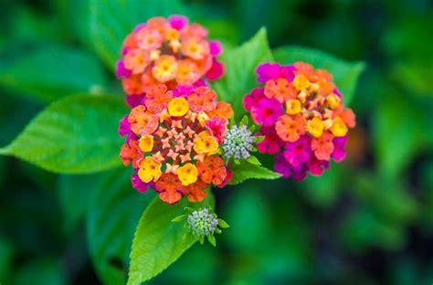 wallpaper bunga full hd 50 jenis bunga tercantik di dunia terlengkap gambar