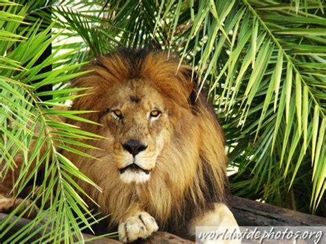 imagenes en 3d de animales salvajes me divierto y aprendo en kinder animales salvajes