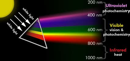Visible Light Definition by What Is Photobiology