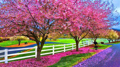 beautiful spring a beautiful spring day wallpaper and background image