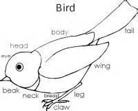August Preschool Curriculum Birds Dinosaurs Nursery Rhymes Picnics  sketch template