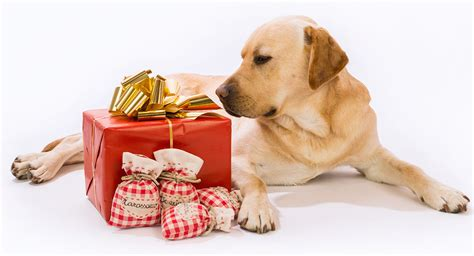 top pet gifts best gifts for dog lovers presents to suit any budget or style