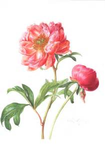 Small Pink Christmas Tree Paeonia Botanic Asia Print Phillips