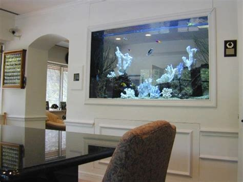 cuisine what are the best fish tank decorations for