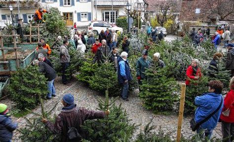 schliengen hochbetrieb beim weihnachtsbaum verkauf