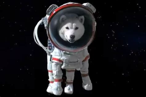 space puppies auction space for sale spacebattles forums