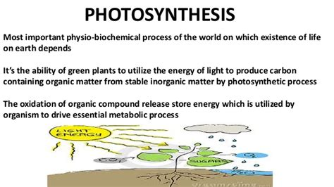 Light Harvesting Complex by Ph0tosystemphotosystem Reaction Center Surrounded By