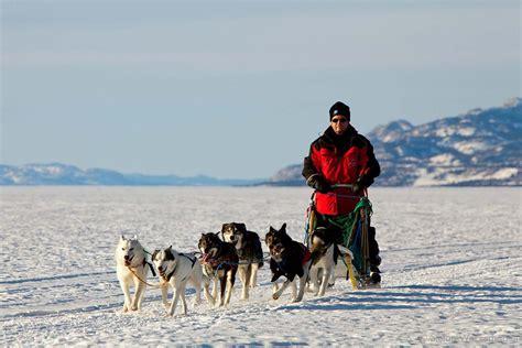 mush sled muktuk adventures sledding adventures yukon territory alaska northern