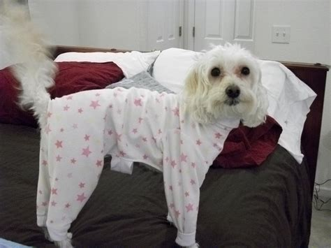 dogs in pajamas for big dogs bigdog boutique