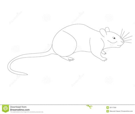 vole royalty  stock  image