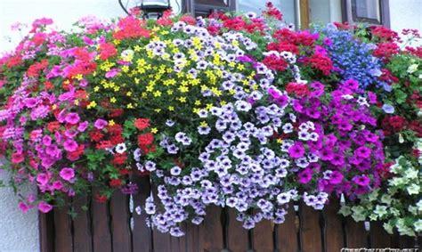 fiori estivi per matrimonio fiori estivi per abbellire balconi e terrazze tutto sui