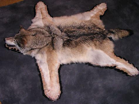 wolf rug taxidermy wolf rug alaska precision taxidermy