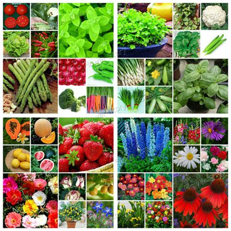 diy flower food 6618pcsvegetable fruit flower 40 kinds seeds emergency