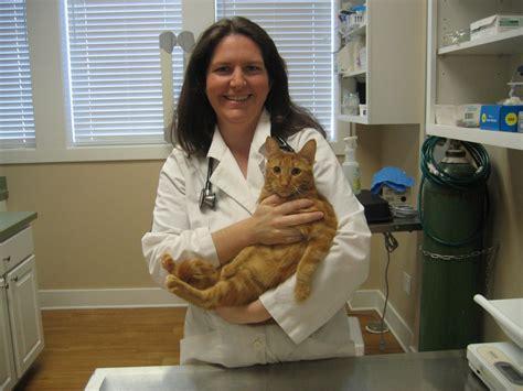 and cat clinic our doctor cat clinic of fernandina fernandina fl