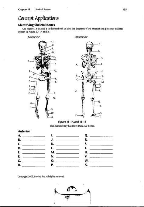 skeletal system diagram worksheet quotes