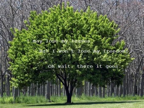the about trees ten haiku written by trees posts from octavarius