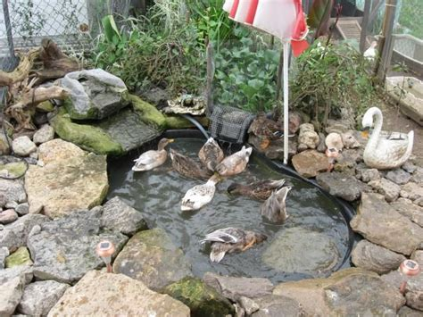 backyard duck ponds triyae com backyard duck pond filter various design