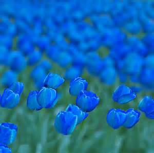 beautiful blue color azul beautiful blue cool fields image 453195 on