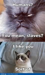 Grumpy cat meme humans you mean slaves i like you jpg