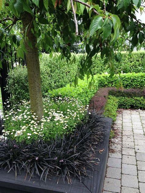 ideas  garden hedges  pinterest hedges privacy landscaping  backyard trees