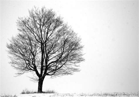black  white art photography  hd wallpaper