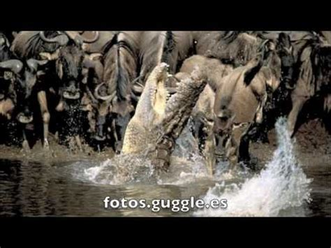 imagenes extraordinarias animales fotos increibles extraordinarias de animales youtube