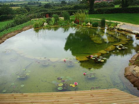 natural swimming pool natural swimming pools warwickshire swimming pond design