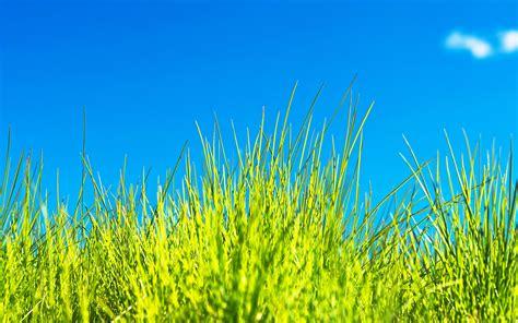 grass wallpapers hd pixelstalknet