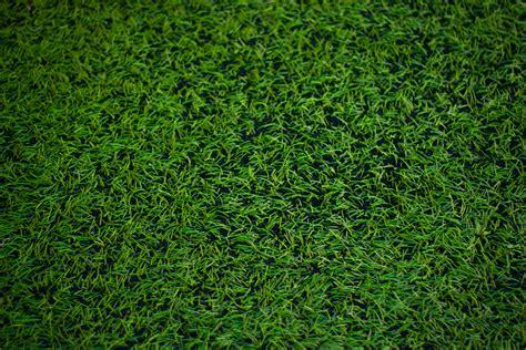 banco de imagens plantar campo gramado folha verde