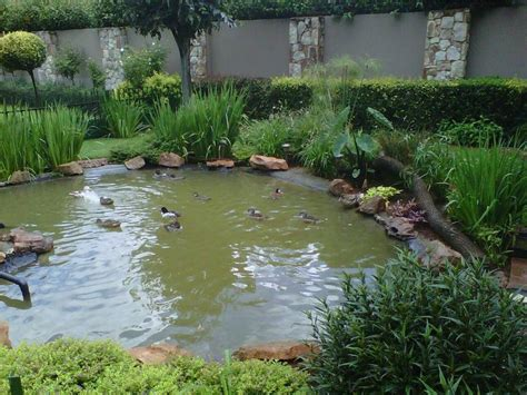 backyard duck pond duck pond aviaries exhibits pinterest ponds ducks