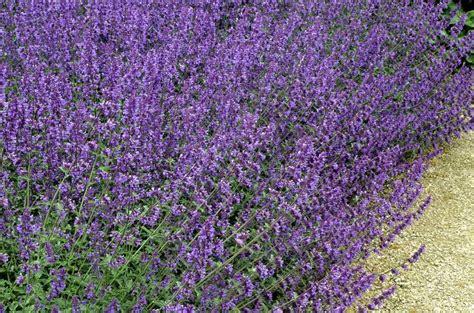 garden pest control plants