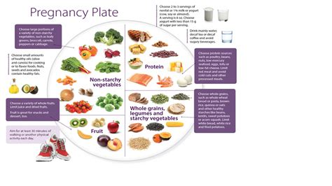 protein needs during pregnancy archives creativetoday