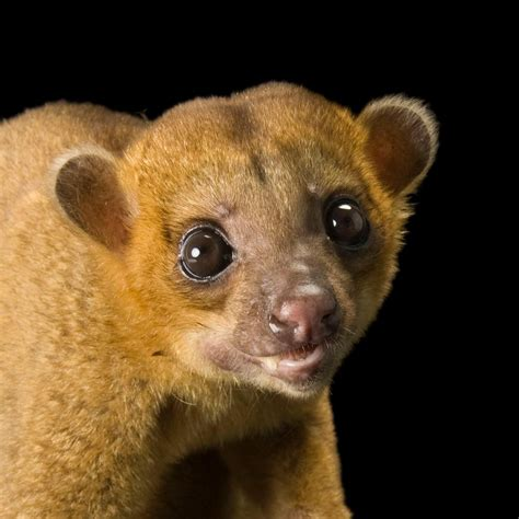Wnh Going Due To Moving by Kinkajou National Geographic