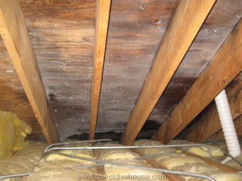 bathroom smells moldy attic black mold and why is it growing in your attic