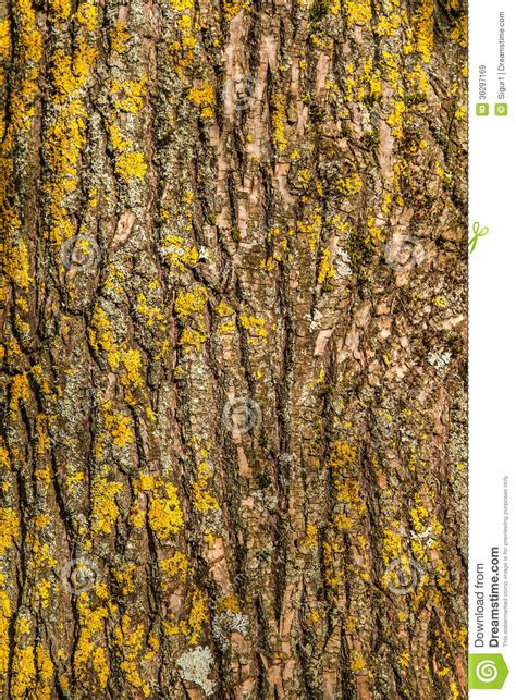 tree trunk royalty  stock images image