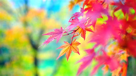 wallpaper hd free download 2014 colors of autumn 2560 215 1440 15 09 2014 top wallpaper hd