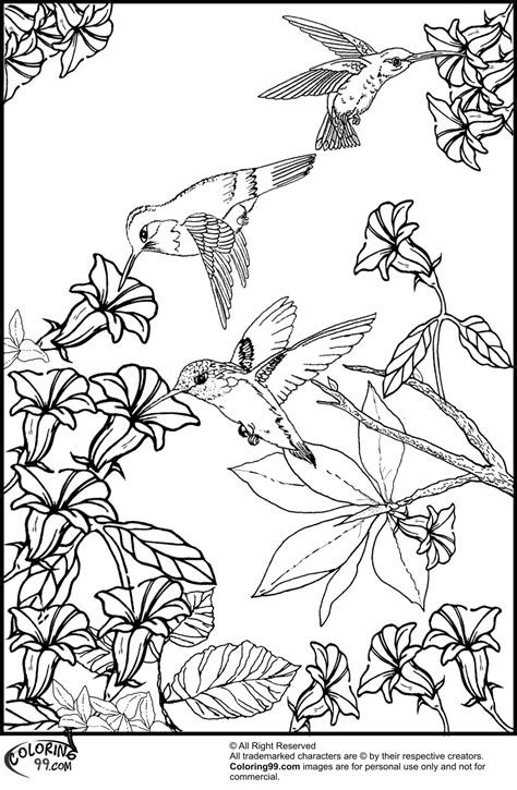coloring page hummingbird hummingbird coloring pages minister coloring