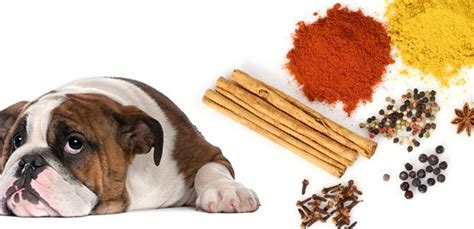 is rosemary safe for dogs herbs and spices for dogs the and the bad the munch zone