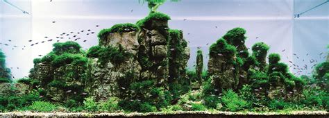 aquascape world aquatic eden aquascaping aquarium blog