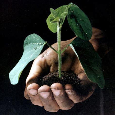 alimentazione biodinamica alimentazione biologica biodinamica e convenzionale un