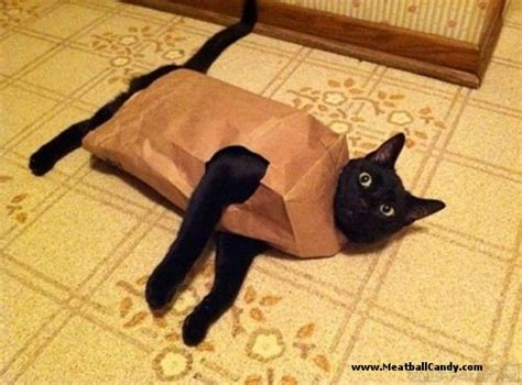 Cat Out Of by Idioms Let The Cat Out Of The Bag Conversationallyspeaking