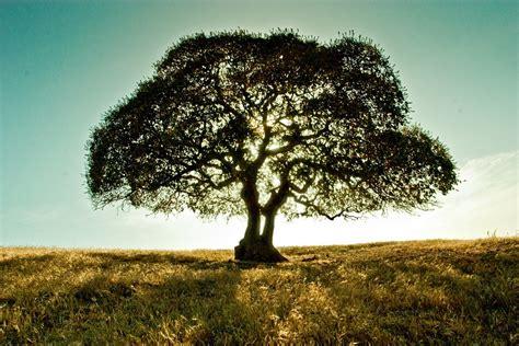 Tree Landscape Field 183 Free Photo On Pixabay