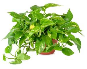 great gifts exotic plants