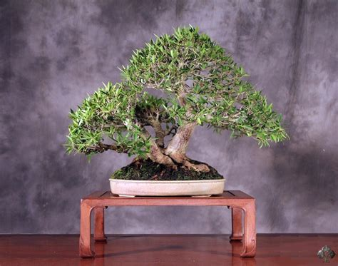 rob kempinski bonsai empire