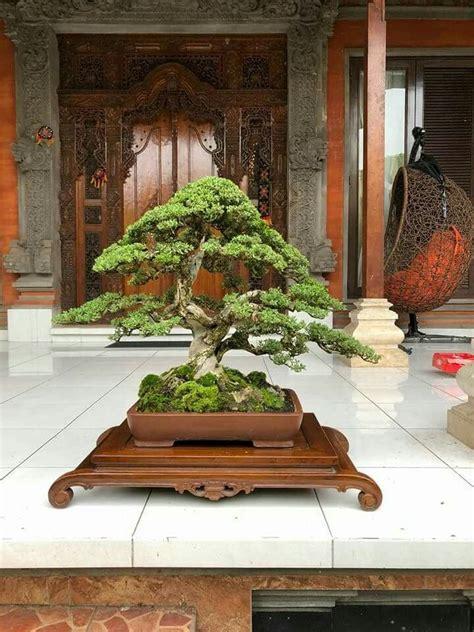 Japanische Bäume Für Den Garten Kaufen by Die Besten 25 Japanische B 228 Ume Ideen Auf