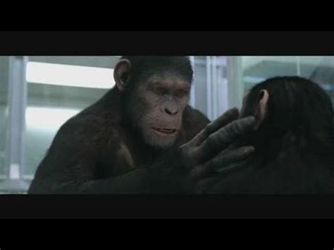 planet of the apes quotes rise of the planet of the apes quotes list
