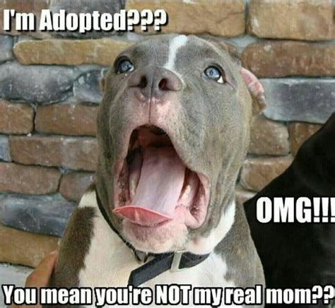 Dog Mom Meme - 20 most funniest animal meme pictures and images