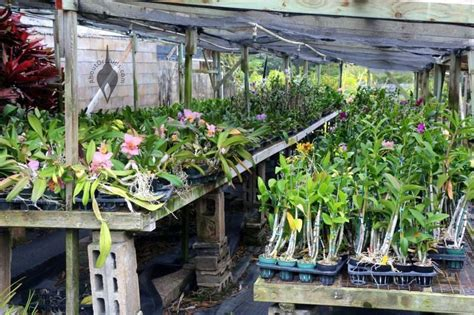 orchid benches aboutorchids 187 blog archive 187 kawamoto orchid nursery